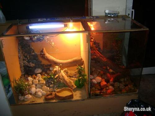 Terrarium With Bearded Dragon Chinese Water Dragon Pets For Sale